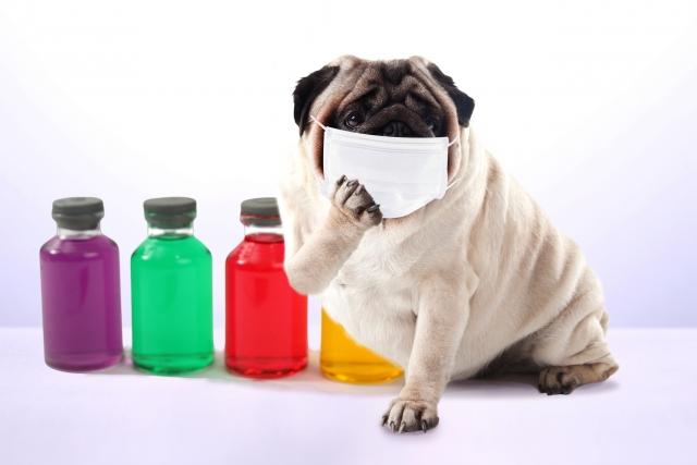 インフルエンザ流行の中バイオプのセミナーへ
